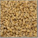 American Wheat (1.5-2.5L) (White Wheat)